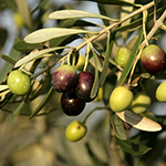 ingredient-oliveoil.jpg