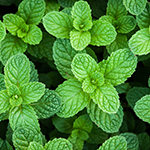 ingredient-peppermint.jpg
