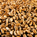 ingredient-wheatgerm.jpg